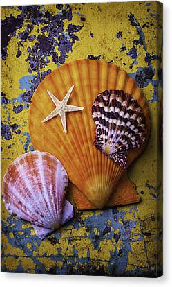 Nature Study Canvas Print - Three Sea Shells And Starfish by Garry Gay