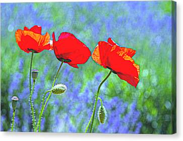 Three Sisters Canvas Print