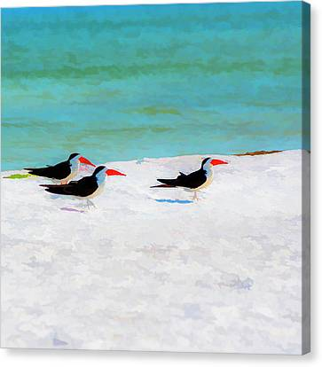 Three Skimmers Canvas Print by Marvin Spates