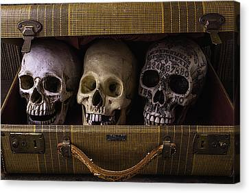 Three Skulls In Suitcase Canvas Print by Garry Gay