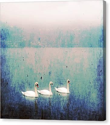 Three Swans Canvas Print by Joana Kruse