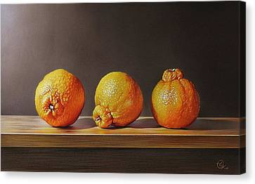 Three Tangelos Canvas Print by Elena Kolotusha