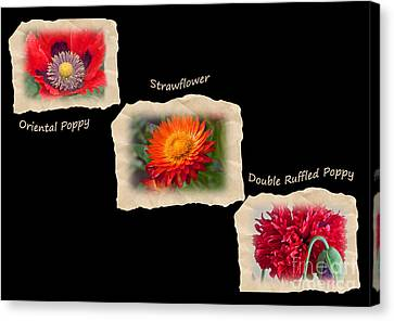 Three Tattered Tiles Of Red Flowers On Black Canvas Print by Valerie Garner
