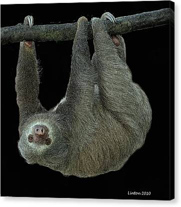 Brown-throated Three-toed Sloth Canvas Print - Three-toed Sloth by Larry Linton