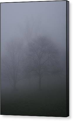 Three Trees In Fog Mount Dandenong Canvas Print by Werner Hammerstingl