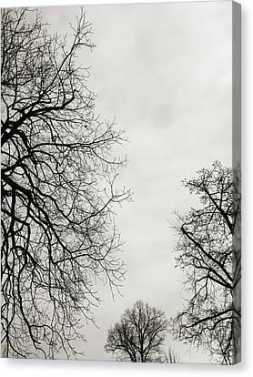 Three Trees Canvas Print by Linda Woods