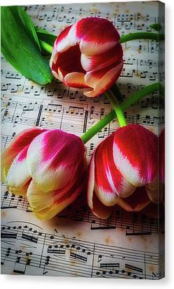 Three Tulips On Sheet Music Canvas Print