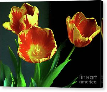 Three Tulips Photo Art Canvas Print by Sharon Talson
