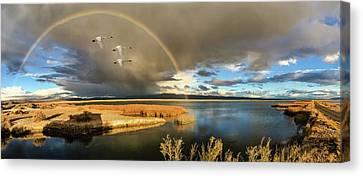 Three Tundra Swans And A Rainbow Canvas Print