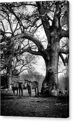 Three Under A Tree In Black And White Canvas Print by Greg Mimbs