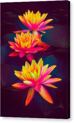 Canvas Print featuring the photograph Three Waterlilies by Chris Lord