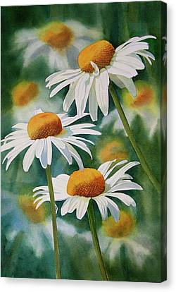 Three Wild Daisies Canvas Print by Sharon Freeman