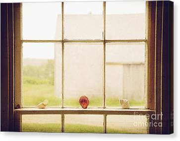 Three Window Shells Canvas Print