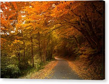 Through The Autumn Glory Canvas Print by Jenny Rainbow