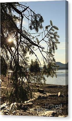 Through The Branches Canvas Print by Carolyn Brown