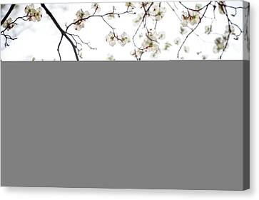 Through The Dogwood Canvas Print by Mother Nature