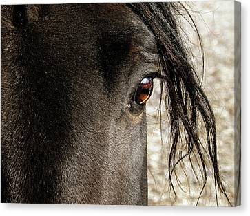 Through The Eye Of A Stallion Canvas Print