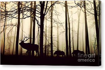 Through The Forest Canvas Print by Thomas Jones