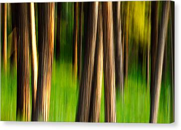 Through The Forest Canvas Print by Todd Klassy