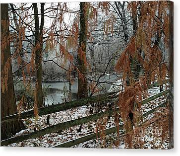 Through The Leaves Of A Winter Landscape  Canvas Print