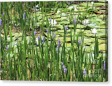 Through The Lily Pond Canvas Print