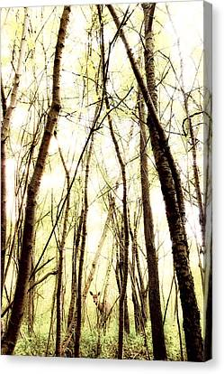 Through The Trees Canvas Print by Humboldt Street
