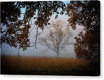 Through The Trees In The Mist Canvas Print by Rick Berk