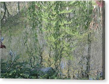 Through The Willows Canvas Print