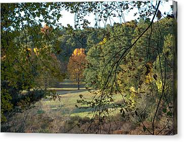 Through The Woods At The Sudbury River Shores, Concord, Massachusetts Canvas Print