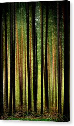 Through The Woods Canvas Print by Svetlana Sewell