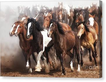 Thundering Hooves Canvas Print by Heather Swan