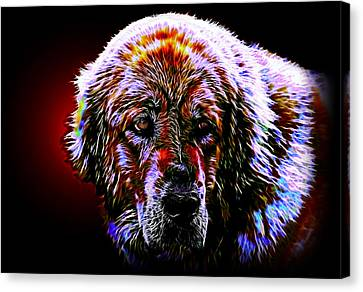 Tibetan Mastiff Canvas Print