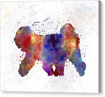 Tibetan Canvas Print - Tibetan Terrier In Watercolor by Pablo Romero