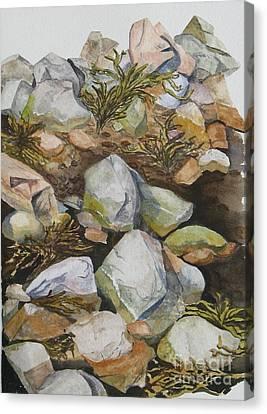 Tidal Pool Canvas Print by Helen Shideler