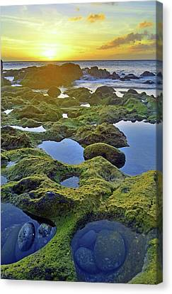 Canvas Print featuring the photograph Tide Pools At Sunset by Tara Turner