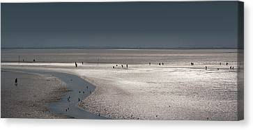 Tidelands Canvas Print
