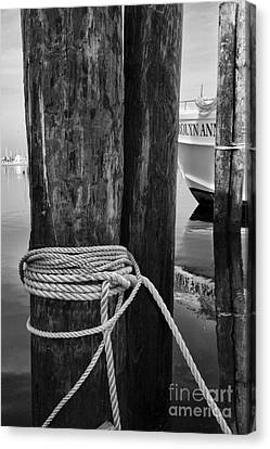 Tied On Canvas Print by Paul Ward