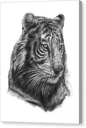 Tiger 1 Canvas Print