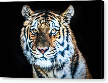 Tiger 2017 Canvas Print by David Millenheft