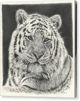 Large Mammals Canvas Print - Tiger Drawing by Remrov