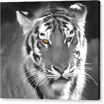 The Tiger Hunt Canvas Print - Tiger Eyes by Dan Sproul