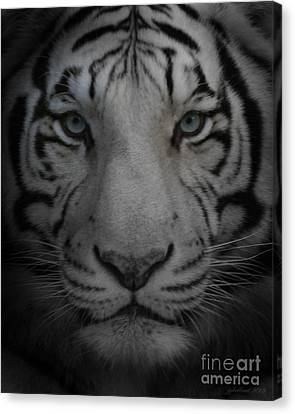 Tiger Eyes Canvas Print by Joseph G Holland