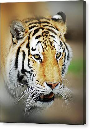 Tiger Eyes Canvas Print by Michael Peychich