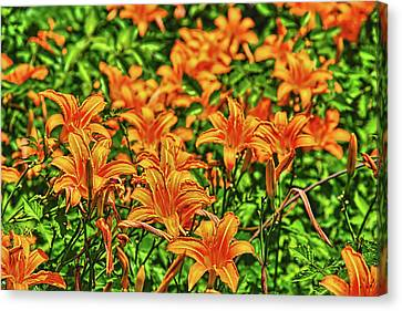 Tiger Lilies Canvas Print by Pat Cook