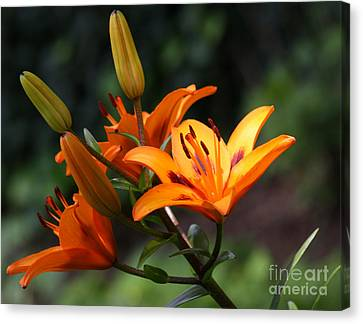 Canvas Print - Tiger Lillies by DazzleMe Photography