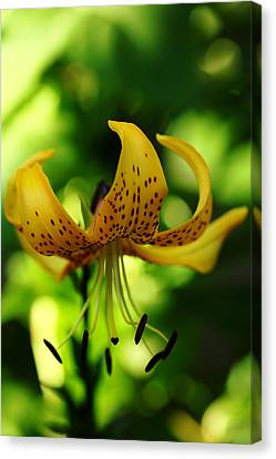 Tiger Lily Canvas Print by Debbie Oppermann