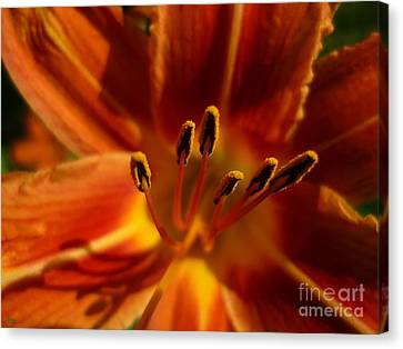 Tiger Lily Canvas Print by Jeff Breiman