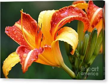 Tiger Lily Profile Canvas Print