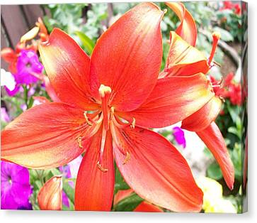 Canvas Print featuring the photograph Tiger Lily by Sharon Duguay