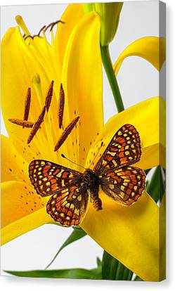 Tiger Lily With Butterfly Canvas Print